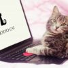 MOTTO CATのライターになりませんか?   MOTTO CAT